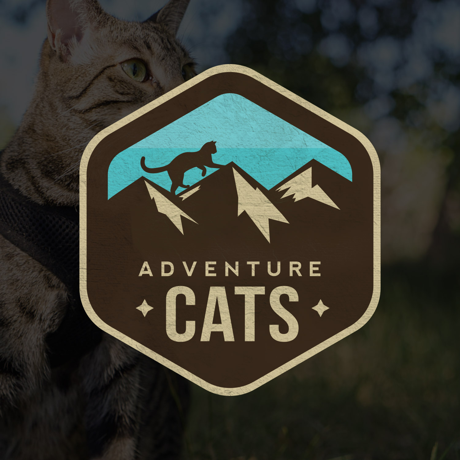 adventure-cats-featured-image